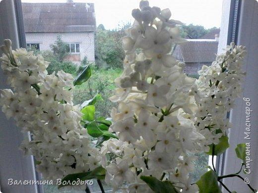 Добрый день дорогие жители Страны Мастеров!!!!Я решила продлить цветение сирени и слепила букет. фото 4