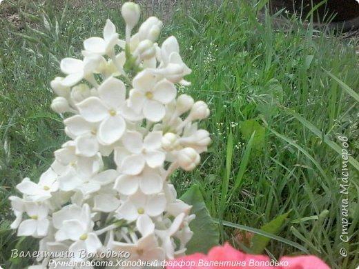 Добрый день дорогие жители Страны Мастеров!!!!Я решила продлить цветение сирени и слепила букет. фото 9