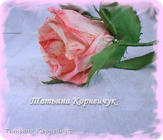 Ох, как долго не поддавались мне розы. Но вот,  кажется, начали они у меня потихоньку получаться. фото 7