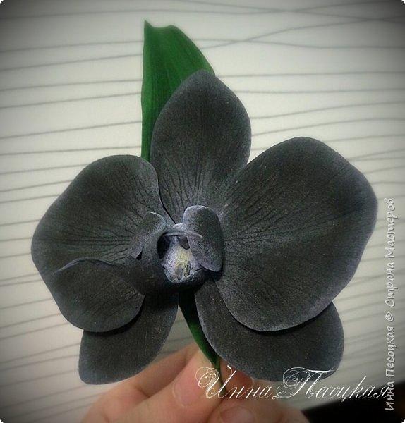 Веточка белой Орхидеи Фаленопсис - это то, с чего все начиналось...))) фото 2