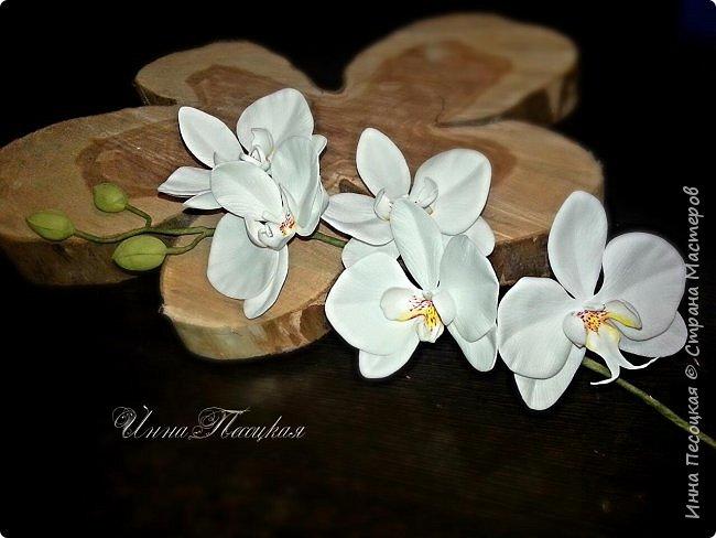 Веточка белой Орхидеи Фаленопсис - это то, с чего все начиналось...))) фото 1