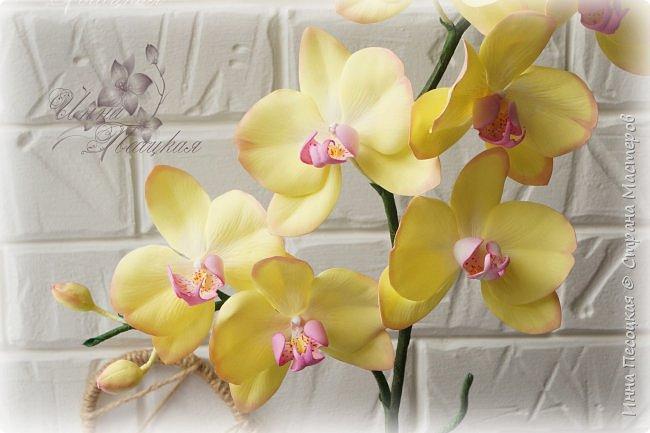 Веточка белой Орхидеи Фаленопсис - это то, с чего все начиналось...))) фото 6