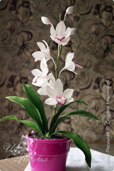 Веточка белой Орхидеи Фаленопсис - это то, с чего все начиналось...))) фото 9