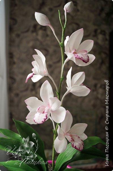 Веточка белой Орхидеи Фаленопсис - это то, с чего все начиналось...))) фото 10