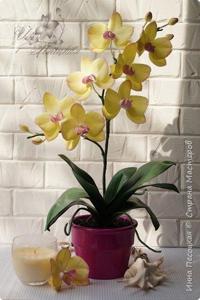Веточка белой Орхидеи Фаленопсис - это то, с чего все начиналось...))) фото 5
