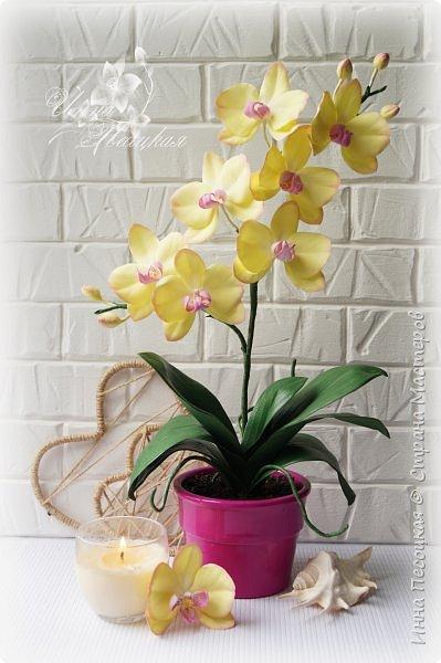 Веточка белой Орхидеи Фаленопсис - это то, с чего все начиналось...))) фото 4