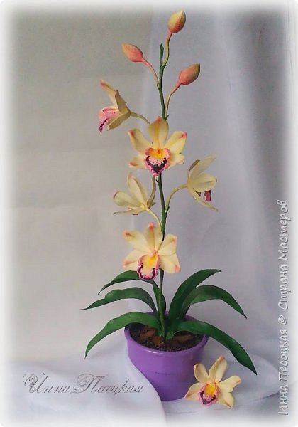 Веточка белой Орхидеи Фаленопсис - это то, с чего все начиналось...))) фото 8