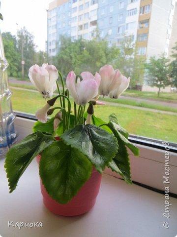 Добрый день, Страна! Наконец руки дошли  до сборки цветка.  Вот такой очередной цикламентик у меня получился. фото 2