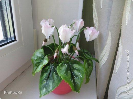 Добрый день, Страна! Наконец руки дошли  до сборки цветка.  Вот такой очередной цикламентик у меня получился. фото 3