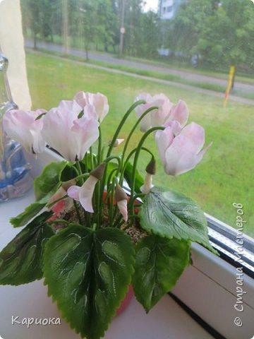Добрый день, Страна! Наконец руки дошли  до сборки цветка.  Вот такой очередной цикламентик у меня получился. фото 6