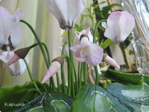 Добрый день, Страна! Наконец руки дошли  до сборки цветка.  Вот такой очередной цикламентик у меня получился. фото 9