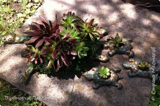 Семья черепашек из глины DAS , проволоки и каменной розы.