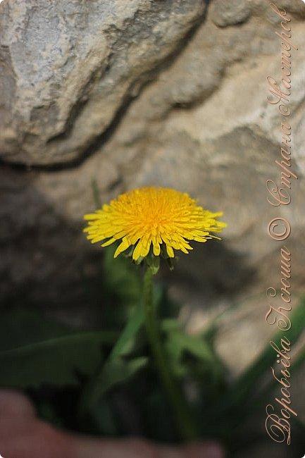 """Доброго времени суток.  Сегодня я сдаю работу на конкурс """" Мир в фотографии"""". Номинация: Пейзажи.  Эта фотография была сделана ранней весной, когда деревья только начинали цвести, но уже в то время природа была очень красива. фото 8"""