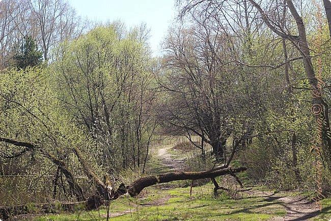 """Доброго времени суток.  Сегодня я сдаю работу на конкурс """" Мир в фотографии"""". Номинация: Пейзажи.  Эта фотография была сделана ранней весной, когда деревья только начинали цвести, но уже в то время природа была очень красива. фото 1"""