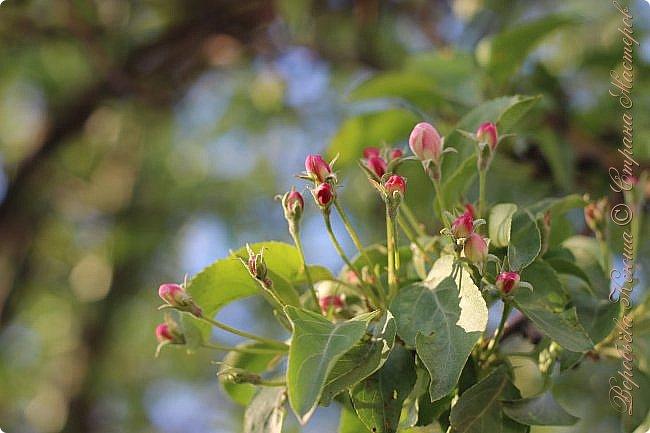 """Доброго времени суток.  Сегодня я сдаю работу на конкурс """" Мир в фотографии"""". Номинация: Пейзажи.  Эта фотография была сделана ранней весной, когда деревья только начинали цвести, но уже в то время природа была очень красива. фото 11"""