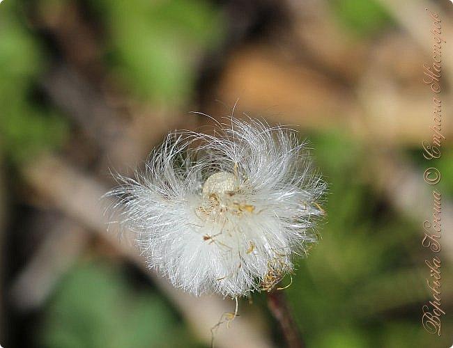 """Доброго времени суток.  Сегодня я сдаю работу на конкурс """" Мир в фотографии"""". Номинация: Пейзажи.  Эта фотография была сделана ранней весной, когда деревья только начинали цвести, но уже в то время природа была очень красива. фото 9"""
