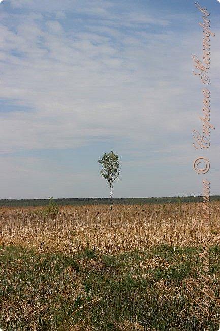 """Доброго времени суток.  Сегодня я сдаю работу на конкурс """" Мир в фотографии"""". Номинация: Пейзажи.  Эта фотография была сделана ранней весной, когда деревья только начинали цвести, но уже в то время природа была очень красива. фото 12"""