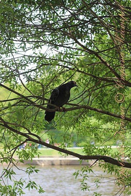 """Доброго времени суток.  Сегодня я сдаю работу на конкурс """" Мир в фотографии"""". Номинация: Пейзажи.  Эта фотография была сделана ранней весной, когда деревья только начинали цвести, но уже в то время природа была очень красива. фото 3"""
