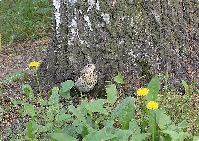 """Доброго времени суток.  Сегодня я сдаю работу на конкурс """" Мир в фотографии"""". Номинация: Пейзажи.  Эта фотография была сделана ранней весной, когда деревья только начинали цвести, но уже в то время природа была очень красива. фото 6"""