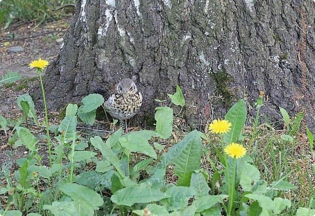 """Доброго времени суток.  Сегодня я сдаю работу на конкурс """" Мир в фотографии"""". Номинация: Пейзажи.  Эта фотография была сделана ранней весной, когда деревья только начинали цвести, но уже в то время природа была очень красива. фото 7"""