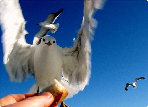"""Работы на конкурс """" Мир в фотографии """"  http://stranamasterov.ru/node/1029450 Его устроила Wonder Hawk 19 http://stranamasterov.ru/user/389208  Номинация 1. Дикая фауна.  Богомол. Он сам """"посетил"""" мою протянутую ладонь.) фото 4"""