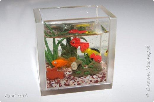 Аквариум миниатюра