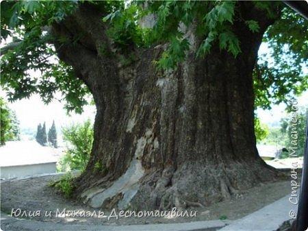 Это стихотворение посвящается 900-летнему платану в городе Телави (столица Кахетии, Грузия) . Одно из любимых моих мест. Говорят, такие большие деревья растут на местах силы, и если рядом с ними хорошо визиализировать свою мечту (то есть представить ее в картинках, или как мысленное кино), то она обязательно сбудется.   фото 1