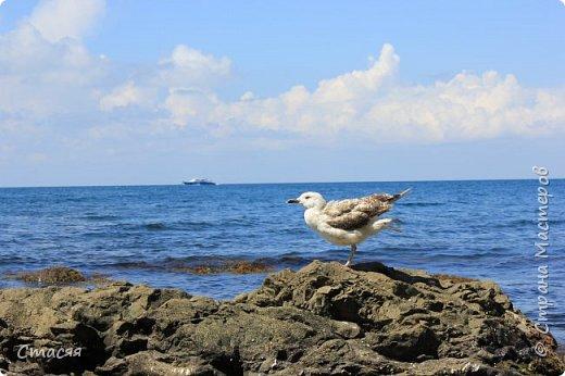 """Работа на конкурс """"Мир в фотографии"""". Номинация 1. Дикая фауна. На фотографии - чайка, на берегу Чёрного моря в окрестностях г. Туапсе фото 1"""