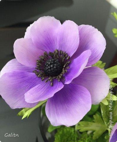 Всем привет!!! Удивительные цветы, напоминающие маленькие розочки или полураспустившиеся пионы, восхищают многих цветоводов-любителей и все же остаются довольно редкими в наших садах.  Это - очаровательные ЛюТиКи азиатские или садовые. фото 12