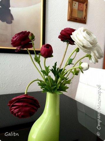 Всем привет!!! Удивительные цветы, напоминающие маленькие розочки или полураспустившиеся пионы, восхищают многих цветоводов-любителей и все же остаются довольно редкими в наших садах.  Это - очаровательные ЛюТиКи азиатские или садовые. фото 6