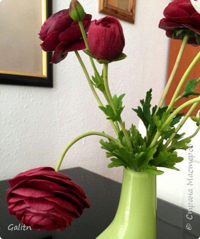 Всем привет!!! Удивительные цветы, напоминающие маленькие розочки или полураспустившиеся пионы, восхищают многих цветоводов-любителей и все же остаются довольно редкими в наших садах.  Это - очаровательные ЛюТиКи азиатские или садовые. фото 2