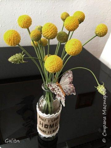 Всем привет!!! Удивительные цветы, напоминающие маленькие розочки или полураспустившиеся пионы, восхищают многих цветоводов-любителей и все же остаются довольно редкими в наших садах.  Это - очаровательные ЛюТиКи азиатские или садовые. фото 8