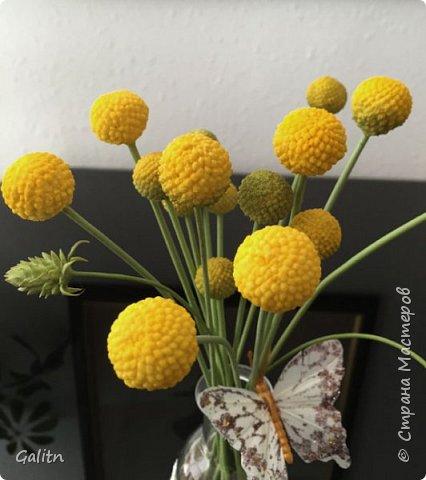 Всем привет!!! Удивительные цветы, напоминающие маленькие розочки или полураспустившиеся пионы, восхищают многих цветоводов-любителей и все же остаются довольно редкими в наших садах.  Это - очаровательные ЛюТиКи азиатские или садовые. фото 9