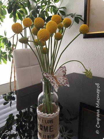 Всем привет!!! Удивительные цветы, напоминающие маленькие розочки или полураспустившиеся пионы, восхищают многих цветоводов-любителей и все же остаются довольно редкими в наших садах.  Это - очаровательные ЛюТиКи азиатские или садовые. фото 10