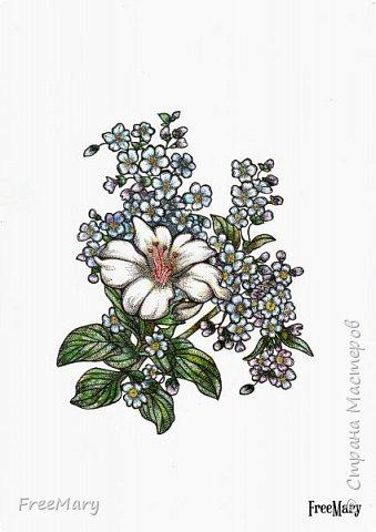 Хризантемы, поэтапный рисунок. На основе гелевой чёрной ручки, акварель и белый маркер.   фото 9