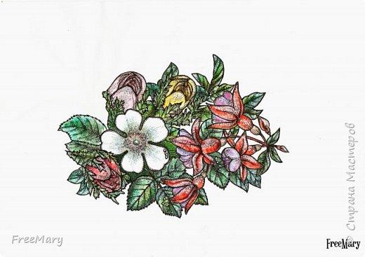 Хризантемы, поэтапный рисунок. На основе гелевой чёрной ручки, акварель и белый маркер.   фото 10