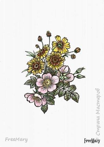 Хризантемы, поэтапный рисунок. На основе гелевой чёрной ручки, акварель и белый маркер.   фото 11