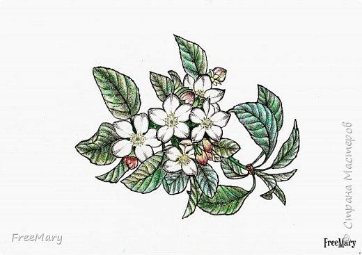 Хризантемы, поэтапный рисунок. На основе гелевой чёрной ручки, акварель и белый маркер.   фото 12