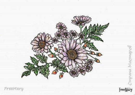Хризантемы, поэтапный рисунок. На основе гелевой чёрной ручки, акварель и белый маркер.   фото 15