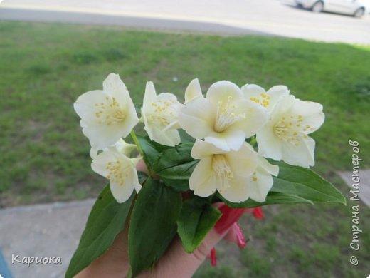 Всем привет! Продолжаю осваивать ХФ. Гуляя на улице увидела цветущий  жасмин и ну оочень захотелось попробовать его слепить. Вот какая маленькая веточка родилась этой ночью. фото 8