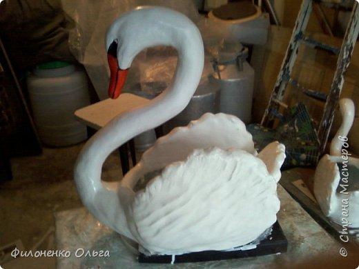 мои лебеди фото 2