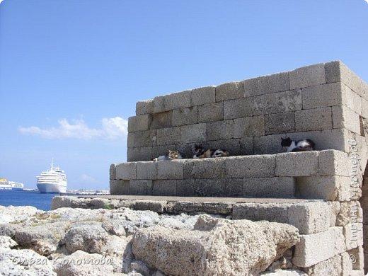 Отдыхали кошки у моря... фото 1