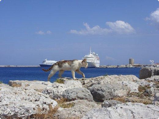Отдыхали кошки у моря... фото 5