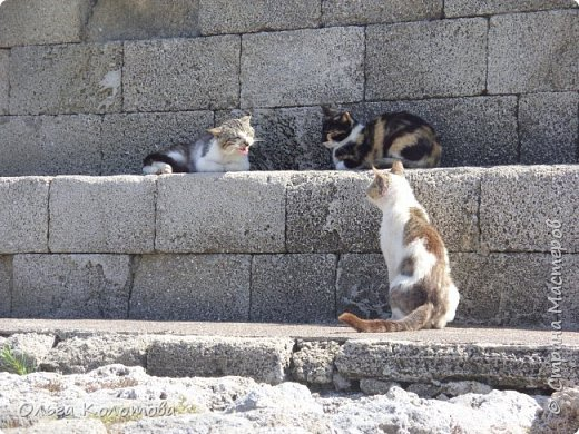 Отдыхали кошки у моря... фото 6