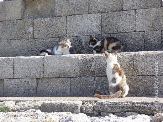 Отдыхали кошки у моря... фото 7