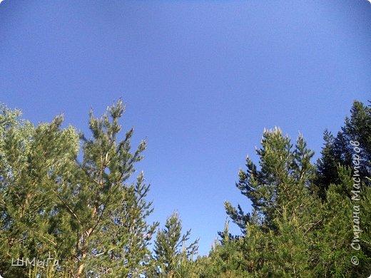 Первый воскресный день лета порадовал солнечным теплом. Выпускники первого класса, захватив с собой старших и младших братишек-сестренок, решили провести его на природе. Отправляемся в окрестности нашего села - лог Арбанак. фото 23
