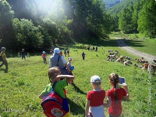Первый воскресный день лета порадовал солнечным теплом. Выпускники первого класса, захватив с собой старших и младших братишек-сестренок, решили провести его на природе. Отправляемся в окрестности нашего села - лог Арбанак. фото 8