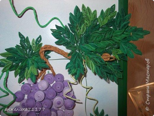 виноград фото 3