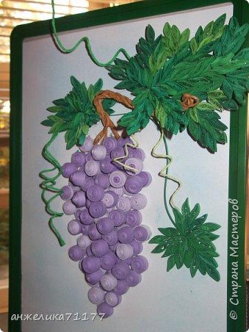виноград фото 4