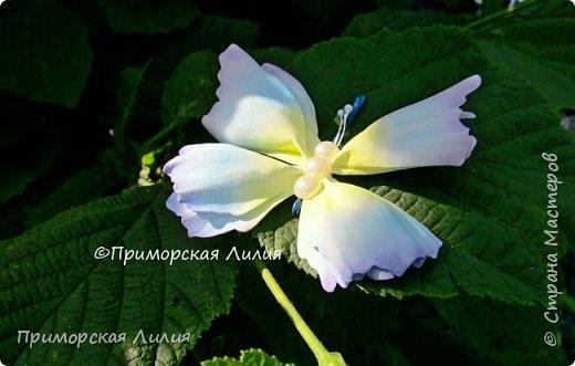 Бабочка из фоамирана. Украшение на лето))) фото 3